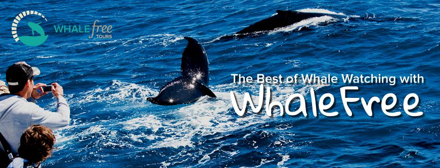 https://www.extremefree.com.au/content/promotion/Package_Banner_WhaleFree.pngWhaleFree — Matt Geldard{/promotion-image}