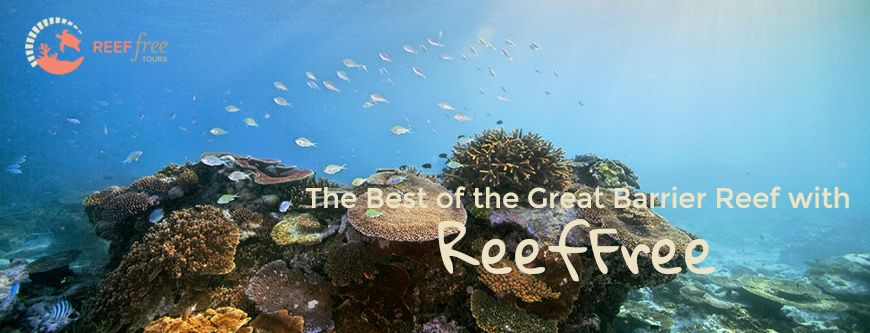 https://www.extremefree.com.au/content/promotion/ReefFree.pngReefFree — Jarad Higgins{/promotion-image}